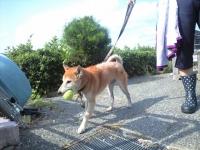 青山町迷い犬