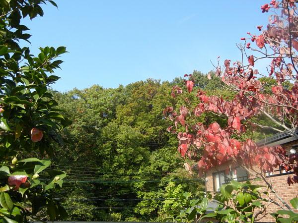 1 家の木の後ろは松殿山荘の木