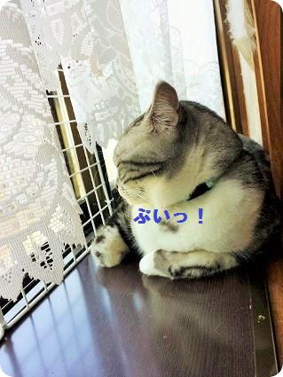 ぷっくりリョーマ3
