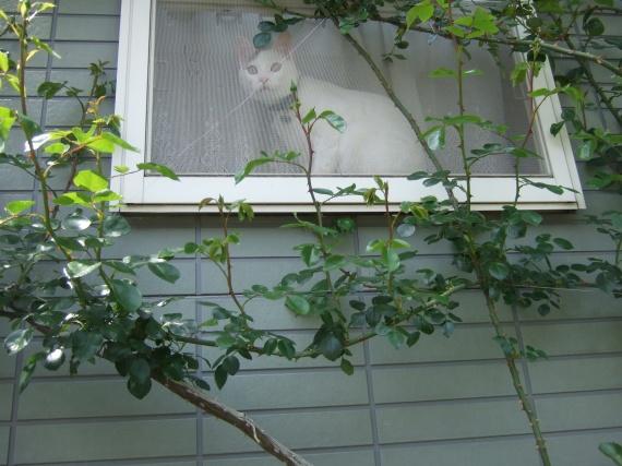 窓からのぞくプー次郎