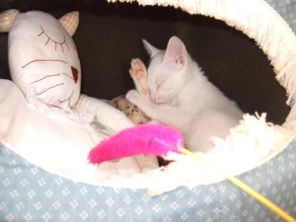 3月17日 プー次郎の赤ちゃん時代4