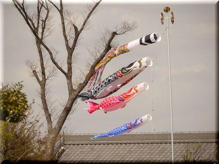 桜を愛できったパグ20109