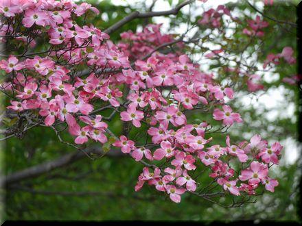 舎人公園は初夏の香り♪7