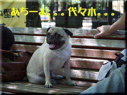 ここは渋谷区代々木中津川?5