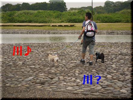ここは葛飾区水元公園中津川?2