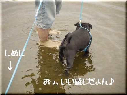 ここは葛飾区水元公園中津川?4