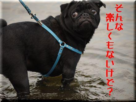 ここは葛飾区水元公園中津川?7