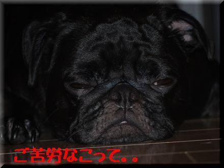 テント張ったどぉー!!6