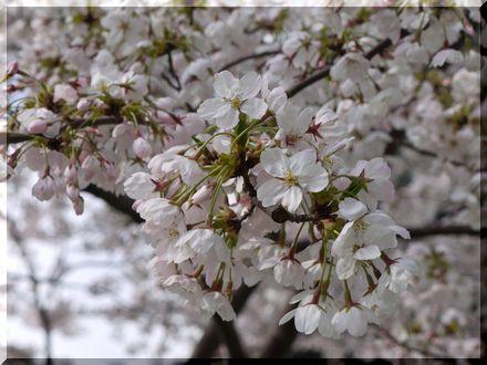 3度目の春1
