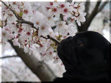 3度目の春8