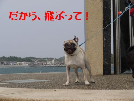パグズと江ノ島へ6