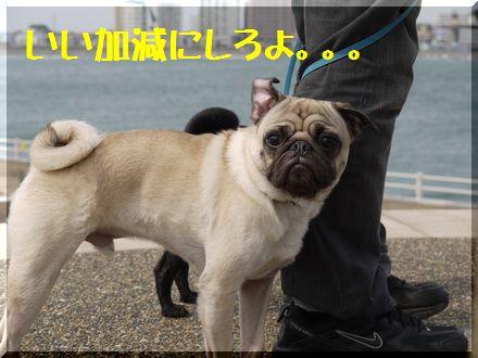 パグズと江ノ島へ7