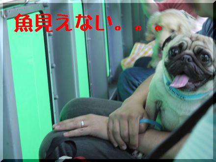 パグと伊豆旅行~『はんなり伊豆高原』へ6