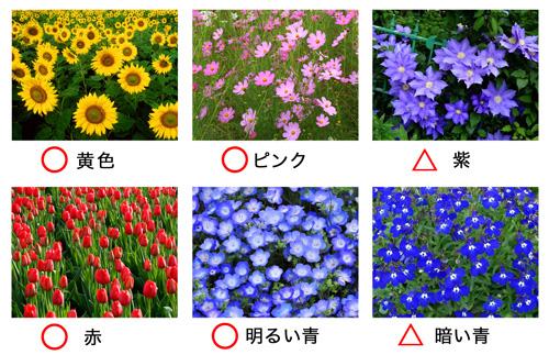 いろんな色の花の比較