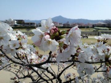 賀茂川と比叡山