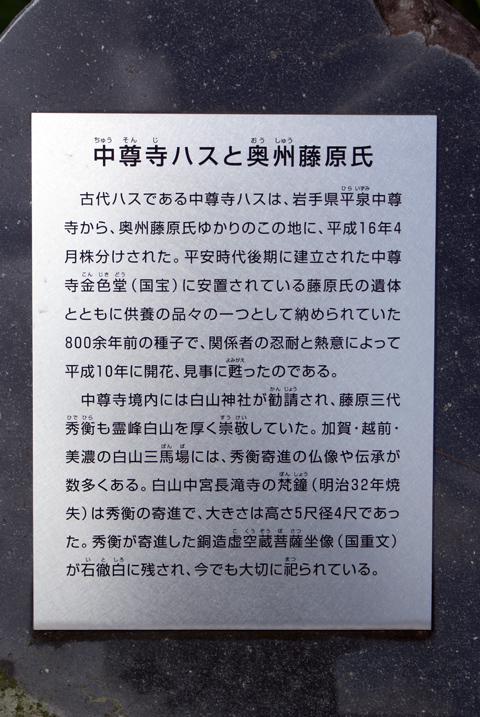 20100719_14