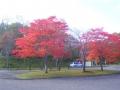10月11日紅葉風景 002