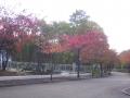10月11日紅葉風景 003