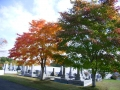 10月11日紅葉風景 008