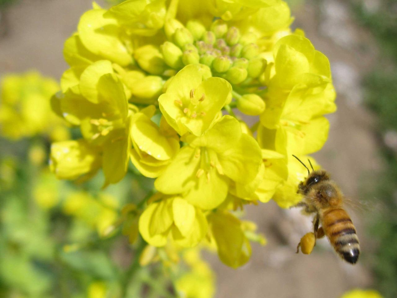 ミツバチトリミング