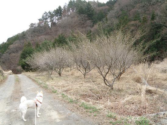 haru3201.jpg