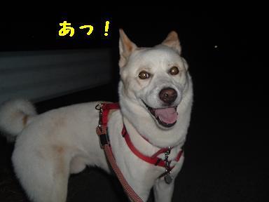 kowaikao1.jpg