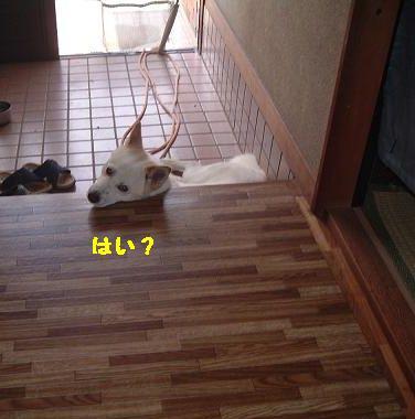 muc7184.jpg