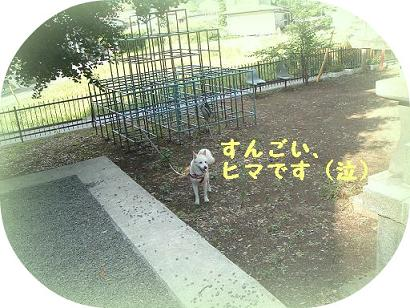 ujigami284.jpg