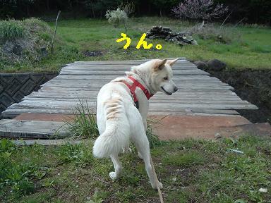 yama4252.jpg