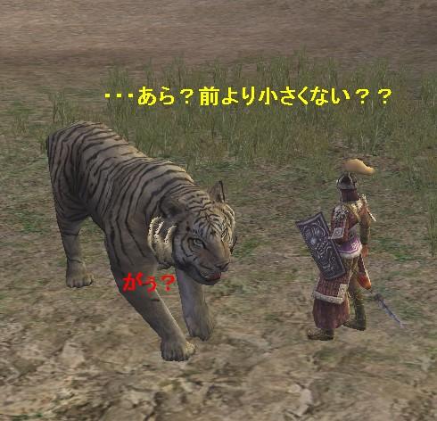 ただの虎?