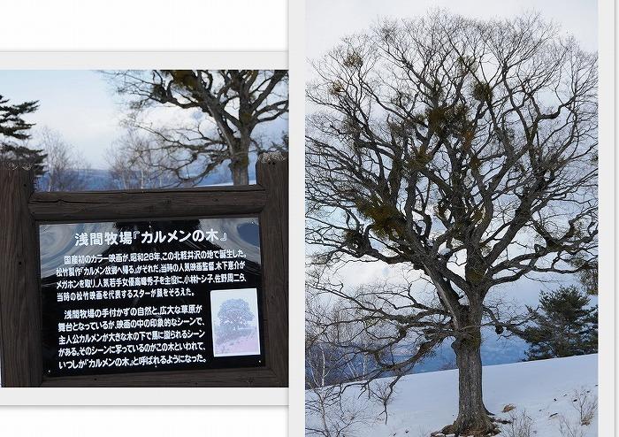 32カルメンの木