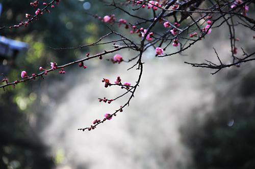 2013_2022梅の花