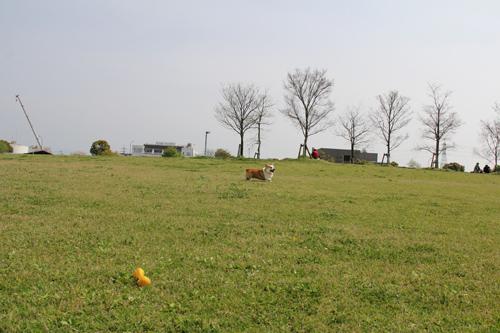 江津湖公園で走る