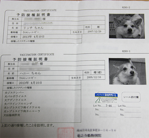 2013予防接種証明書