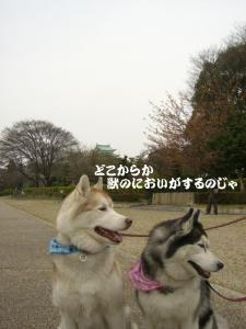 2010 3月名古屋城 002 1