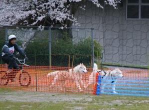 2010 4月ギグレースin美山 496
