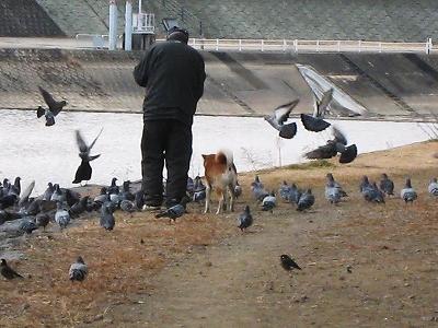 パンを貰う鳥たち