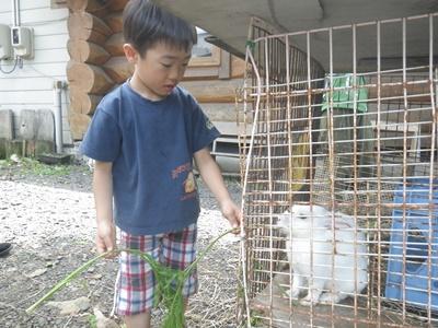 どっちのウサギを