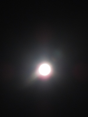 20110119 (17)