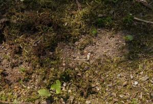 DSC05381苔穴だらけ