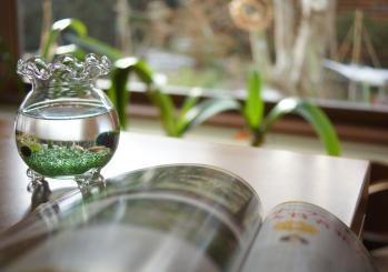 DSC03196 - コピー金魚鉢と園芸ガイド