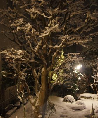 DSC03863 (3)大カエデ雪をまとう