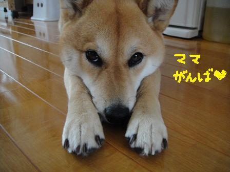 ichi108x.jpg