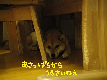 ichi114c.jpg