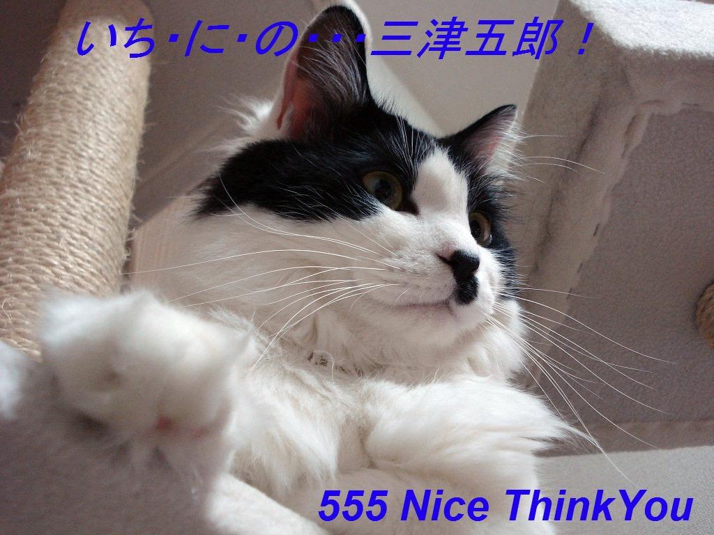 DSC03532 - コピー