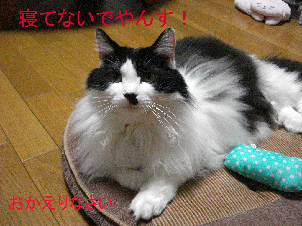 DSC08477.jpg