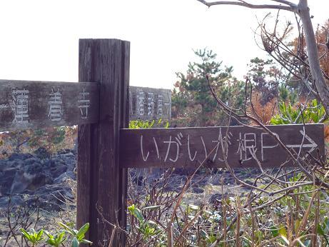 2011.11.17.イガイガ根 023.JPG