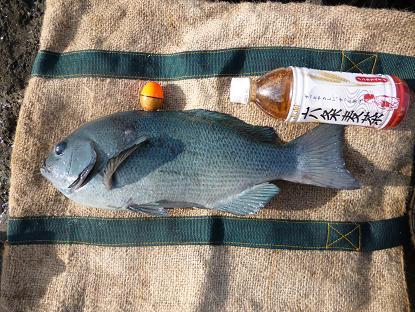 2011.12.28_29 利島 090.JPG