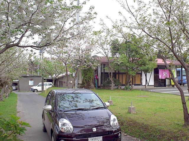 私の車と桜