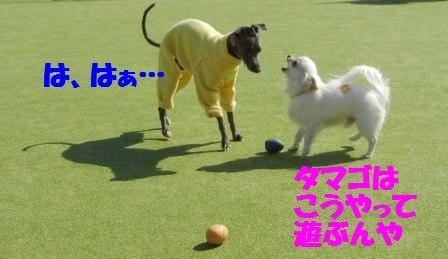 ボールの遊び方